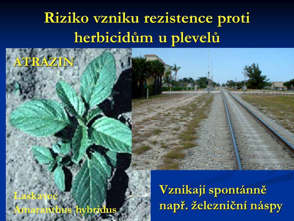 Riziko vzniku rezistence proti herbicidům u plevelů Laskavec Amaranthus hybridus Vznikají spontánně např.