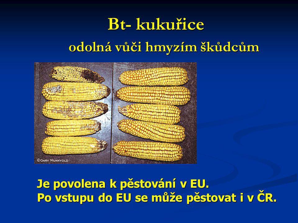 Bt- kukuřice odolná vůči hmyzím škůdcům Bt- kukuřice odolná vůči hmyzím škůdcům Je povolena k pěstování v EU.