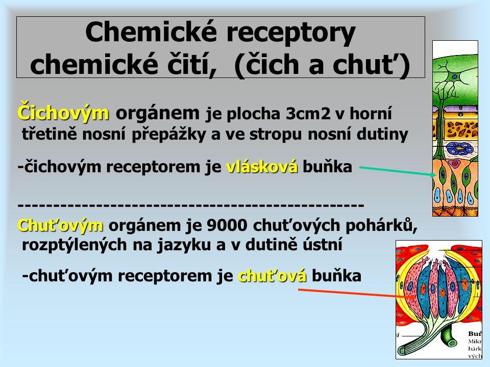 Chemické receptory chemické čití, (čich a chuť) Čichovým Čichovým orgánem je plocha 3cm2 v horní třetině nosní přepážky a ve stropu nosní dutiny vlásk
