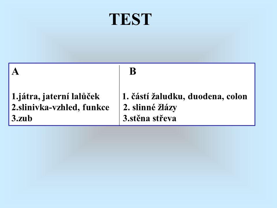 A B 1.játra, jaterní lalůček 1. částí žaludku, duodena, colon 2.slinivka-vzhled, funkce 2. slinné žlázy 3.zub 3.stěna střeva TEST
