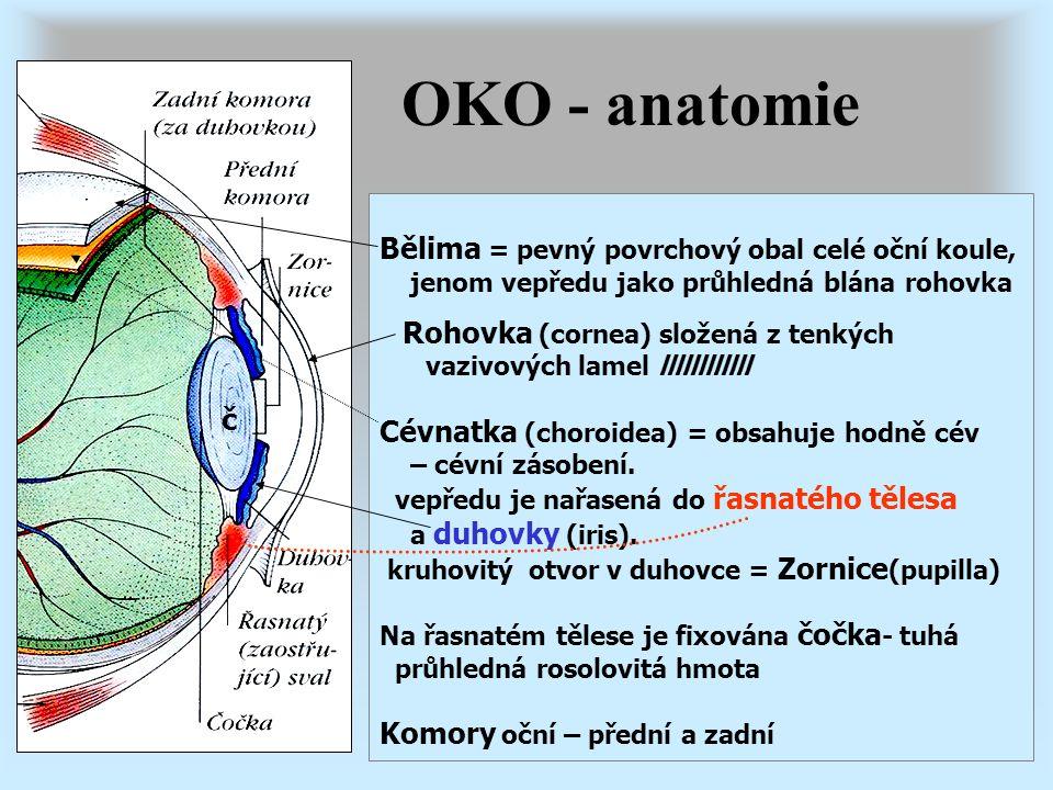 OKO - anatomie Bělima = pevný povrchový obal celé oční koule, jenom vepředu jako průhledná blána rohovka Rohovka (cornea) složená z tenkých vazivových