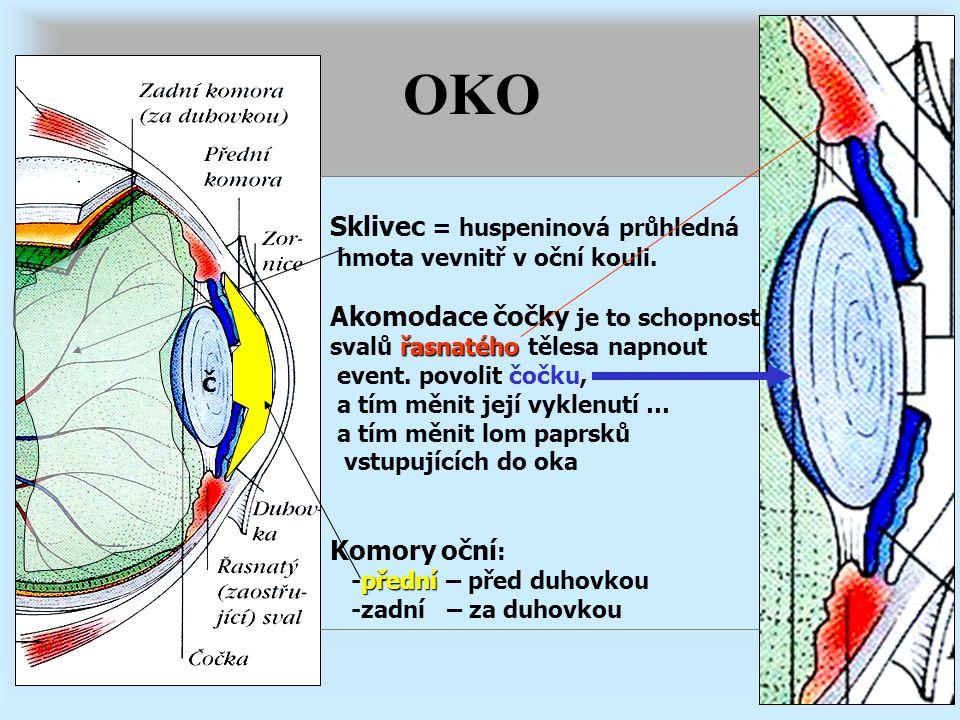 OKO Sklivec = huspeninová průhledná hmota vevnitř v oční kouli. Akomodace čočky je to schopnost řasnatého svalů řasnatého tělesa napnout event. povoli