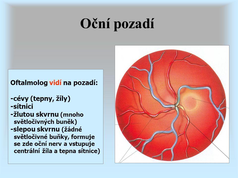 Oční pozadí Oftalmolog vidí na pozadí: -cévy (tepny, žíly) -sítnici -žlutou skvrnu (mnoho světločivných buněk) -slepou skvrnu (žádné světločivné buňky