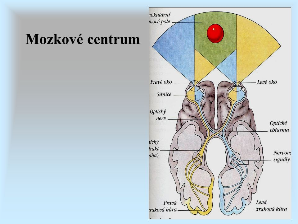Mozkové centrum