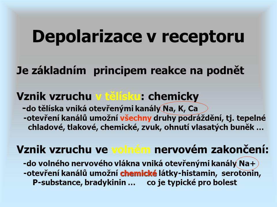 Je základním principem reakce na podnět Vznik vzruchu v tělísku: chemicky - do tělíska vniká otevřenými kanály Na, K, Ca -otevření kanálů umožní všech