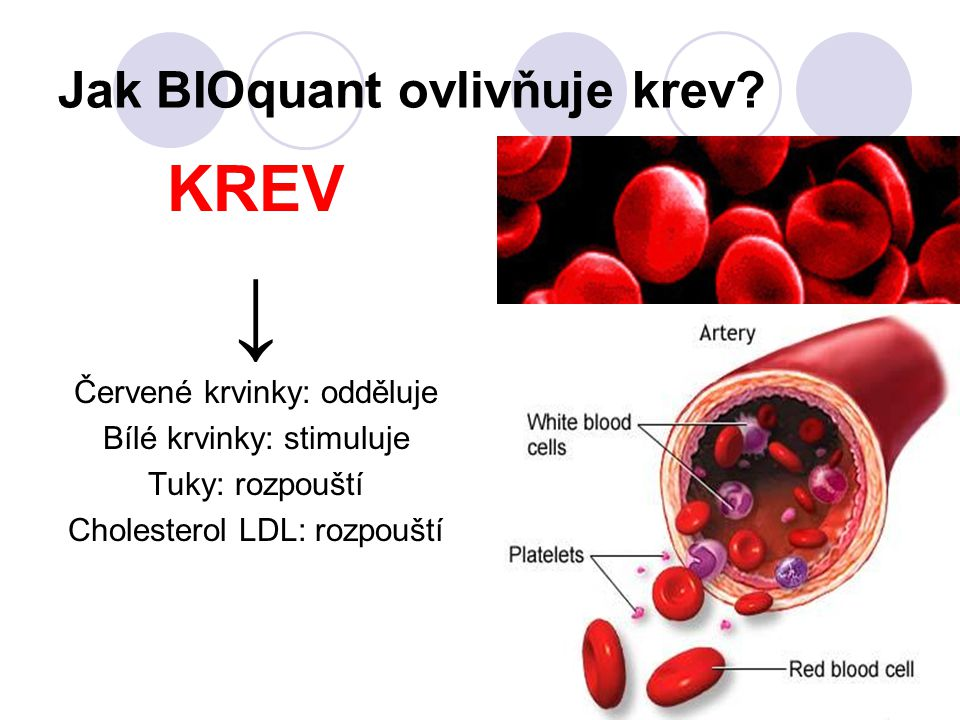 Jak BIOquant ovlivňuje krev? KREV ↓ Červené krvinky: odděluje Bílé krvinky: stimuluje Tuky: rozpouští Cholesterol LDL: rozpouští