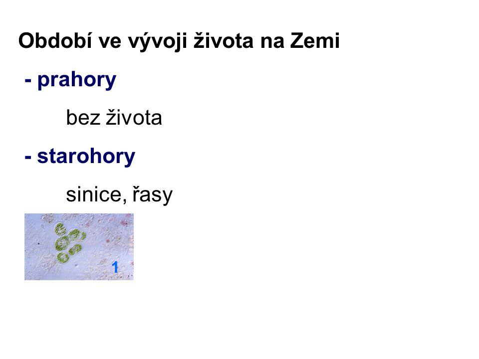 - prvohory trilobiti, hlavonožci, paryby - druhohory plazi, savci, veleještěři 2 3