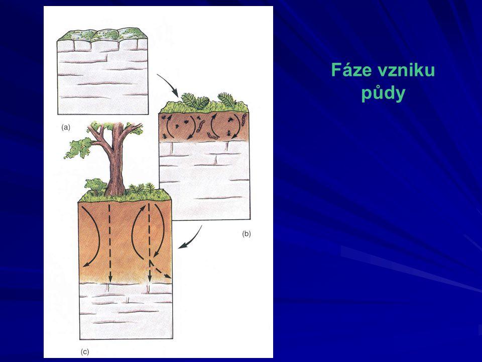 Fáze vzniku půdy