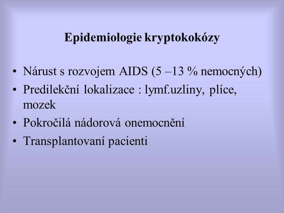 Epidemiologie kryptokokózy Nárust s rozvojem AIDS (5 –13 % nemocných) Predilekční lokalizace : lymf.uzliny, plíce, mozek Pokročilá nádorová onemocnění