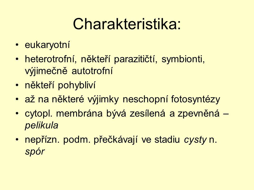 Charakteristika: eukaryotní heterotrofní, někteří parazitičtí, symbionti, výjimečně autotrofní někteří pohybliví až na některé výjimky neschopní fotos