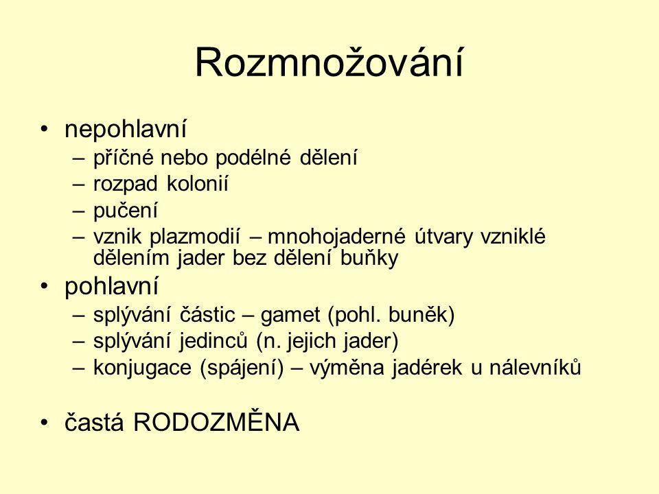 Systém: Doména: Eukaryota Říše: Amoebozoa Říše: Opisthokonta Říše: Chromalveolata Říše: Excavata Říše: Rhizaria