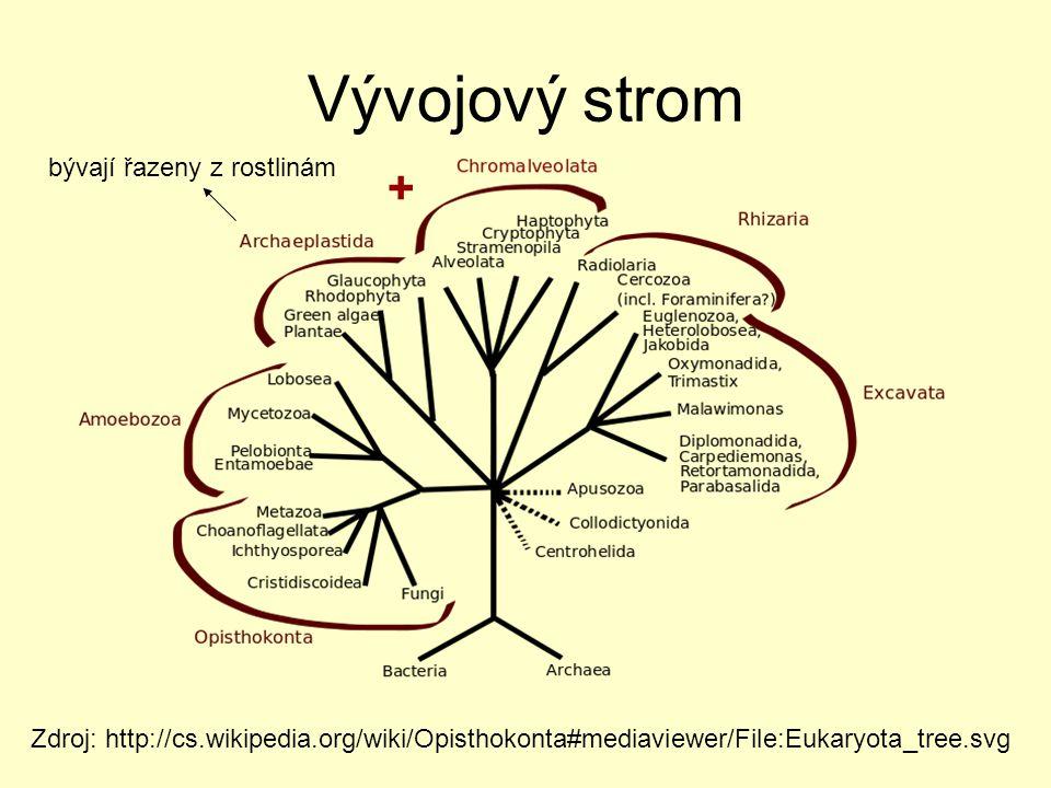 Vývojový strom Zdroj: http://cs.wikipedia.org/wiki/Opisthokonta#mediaviewer/File:Eukaryota_tree.svg + bývají řazeny z rostlinám