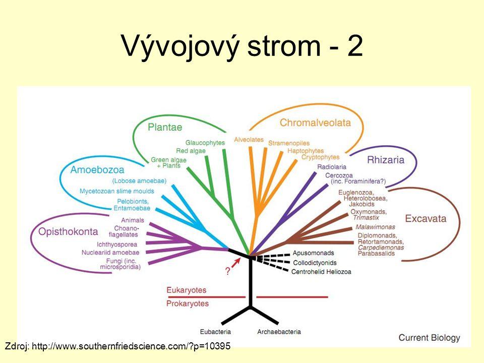 Vývojový strom - 2 Zdroj: http://www.southernfriedscience.com/?p=10395
