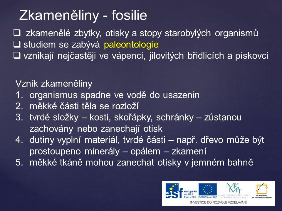 Zkameněliny - fosilie  zkamenělé zbytky, otisky a stopy starobylých organismů  studiem se zabývá paleontologie  vznikají nejčastěji ve vápenci, jil