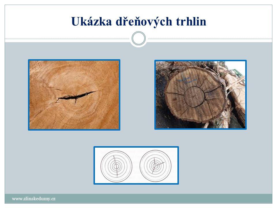 Trhliny v rostoucím dřevě – vnitřní trhliny www.zlinskedumy.cz Odlupčivé - tangenciální Jedná se o trhliny mezi letokruhy, které vznikají v rostoucím stromě a mají značný rozsah v délce sortimentu.