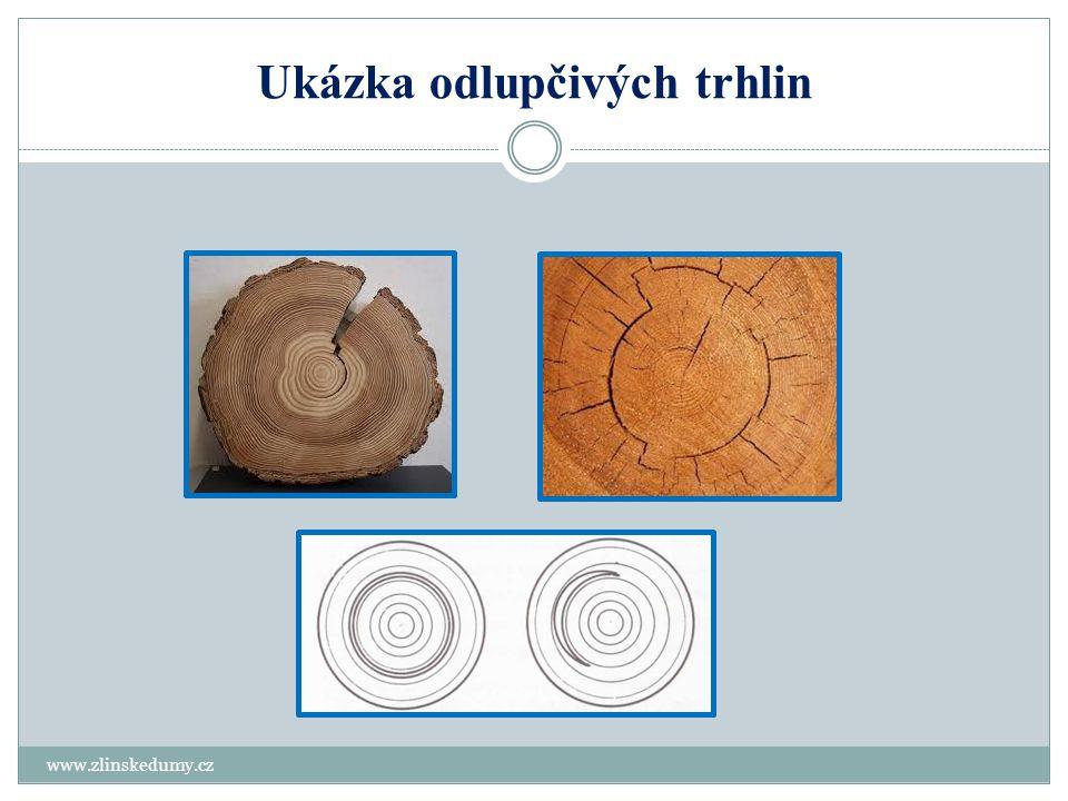 Trhliny vzniklé vysoušením dřeva www.zlinskedumy.cz Výsušné trhliny - jedná se o radiální trhliny, které vznikají v pokáceném stromu při vysychání dřeva.