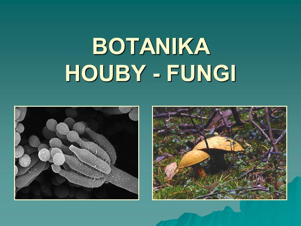 BOTANIKA HOUBY - FUNGI