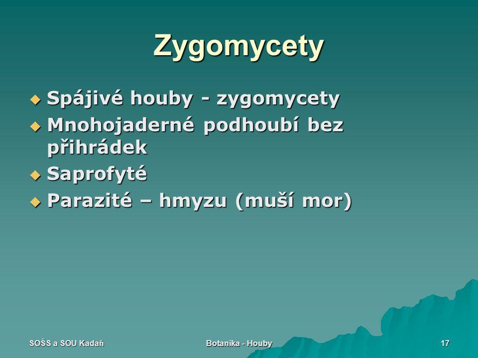 SOŠS a SOU Kadaň Botanika - Houby 17 Zygomycety  Spájivé houby - zygomycety  Mnohojaderné podhoubí bez přihrádek  Saprofyté  Parazité – hmyzu (muší mor)