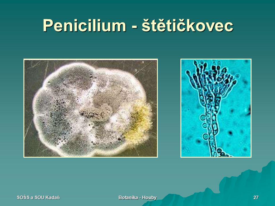 SOŠS a SOU Kadaň Botanika - Houby 27 Penicilium - štětičkovec
