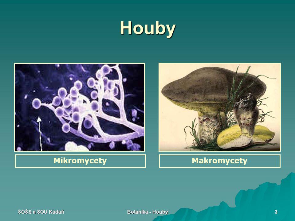 SOŠS a SOU Kadaň Botanika - Houby 3 Houby MikromycetyMakromycety