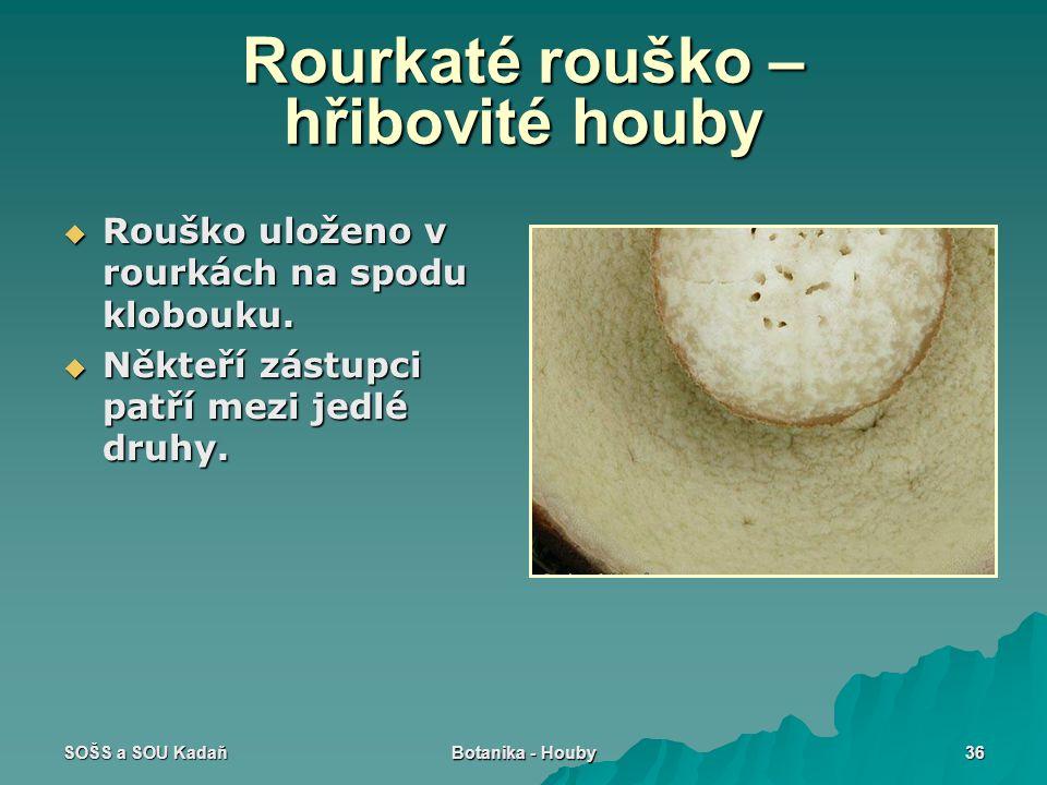 SOŠS a SOU Kadaň Botanika - Houby 36 Rourkaté rouško – hřibovité houby  Rouško uloženo v rourkách na spodu klobouku.