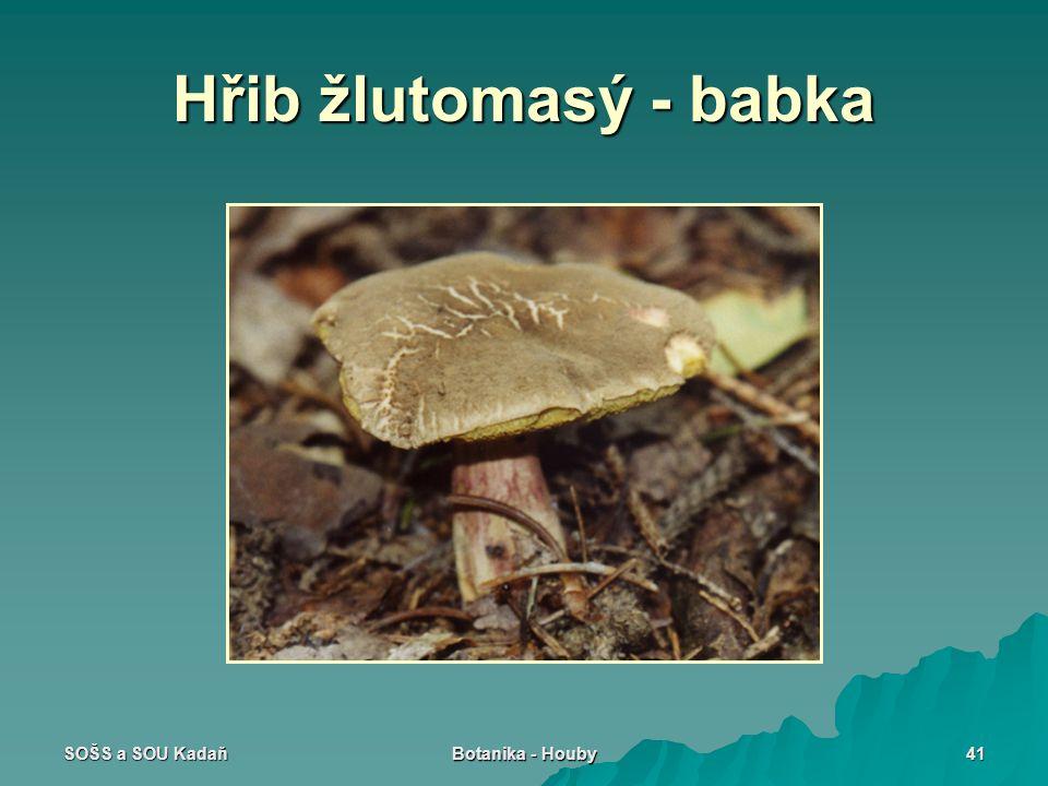 SOŠS a SOU Kadaň Botanika - Houby 41 Hřib žlutomasý - babka