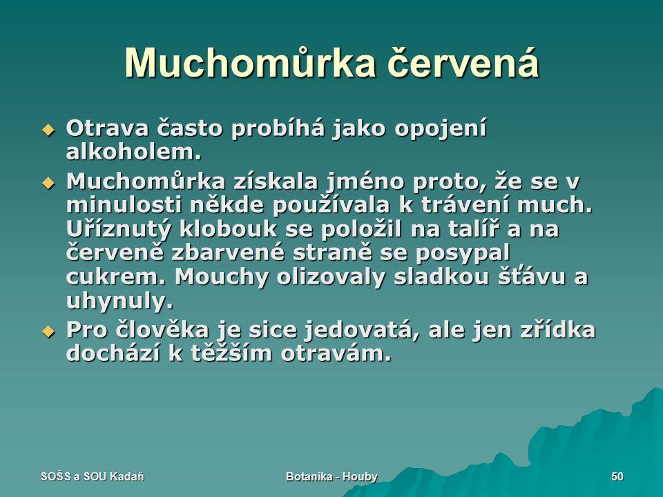 SOŠS a SOU Kadaň Botanika - Houby 50 Muchomůrka červená  Otrava často probíhá jako opojení alkoholem.