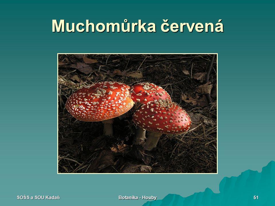 SOŠS a SOU Kadaň Botanika - Houby 51 Muchomůrka červená