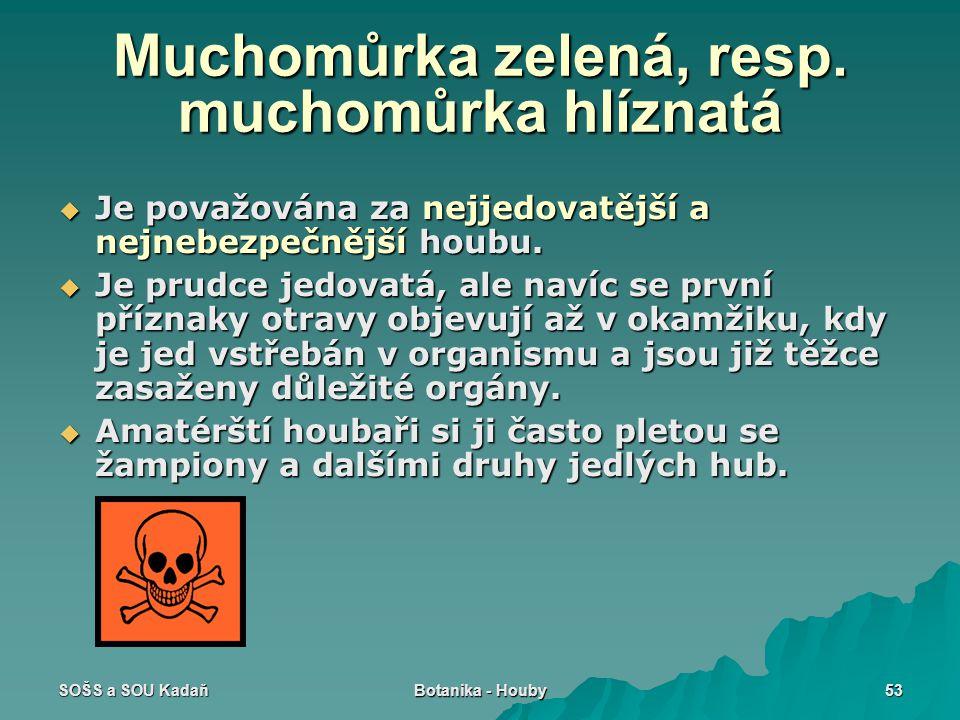 SOŠS a SOU Kadaň Botanika - Houby 53 Muchomůrka zelená, resp.