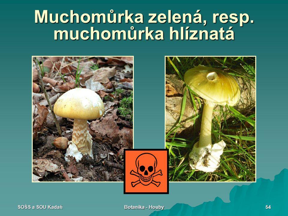 SOŠS a SOU Kadaň Botanika - Houby 54 Muchomůrka zelená, resp. muchomůrka hlíznatá