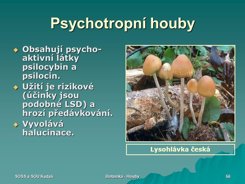 SOŠS a SOU Kadaň Botanika - Houby 56 Psychotropní houby  Obsahují psycho- aktivní látky psilocybin a psilocin.