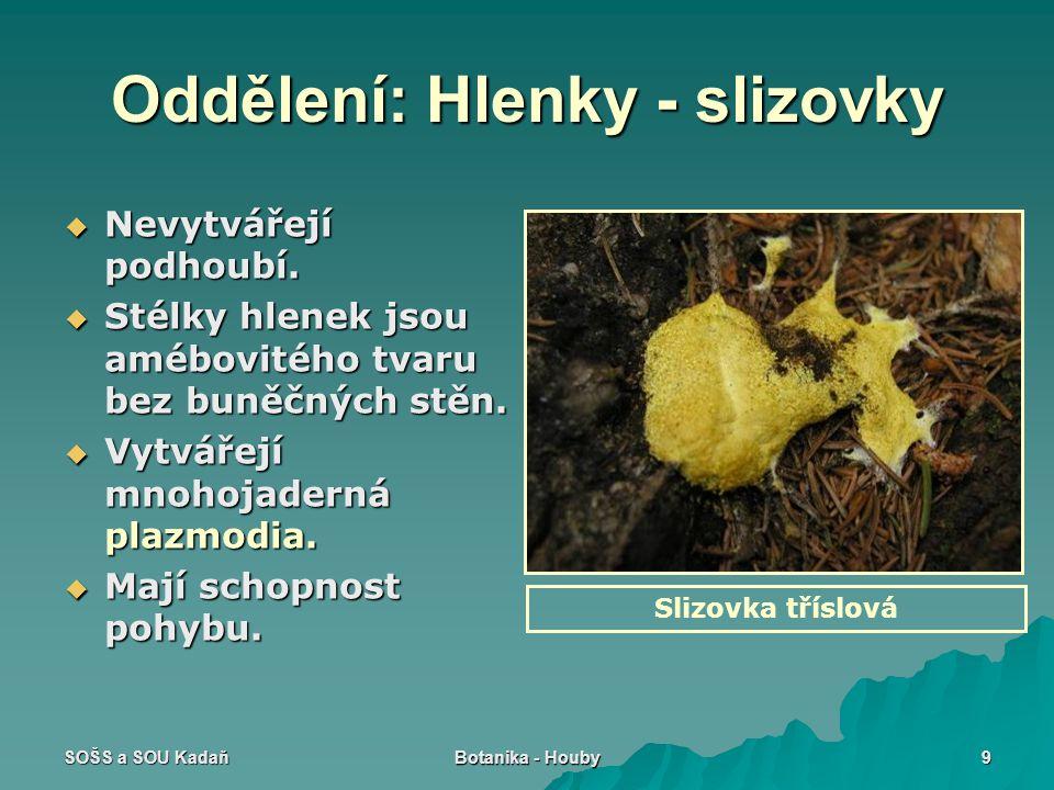SOŠS a SOU Kadaň Botanika - Houby 9 Oddělení: Hlenky - slizovky  Nevytvářejí podhoubí.