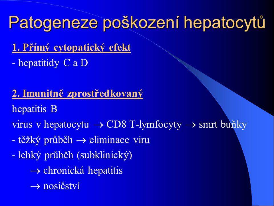Patogeneze poškození hepatocytů 1. Přímý cytopatický efekt - hepatitidy C a D 2. Imunitně zprostředkovaný hepatitis B virus v hepatocytu  CD8 T-lymfo