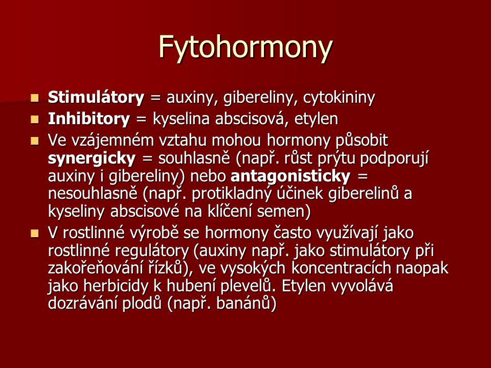 Fytohormony Stimulátory = auxiny, gibereliny, cytokininy Inhibitory = kyselina abscisová, etylen Ve vzájemném vztahu mohou hormony působit synergicky