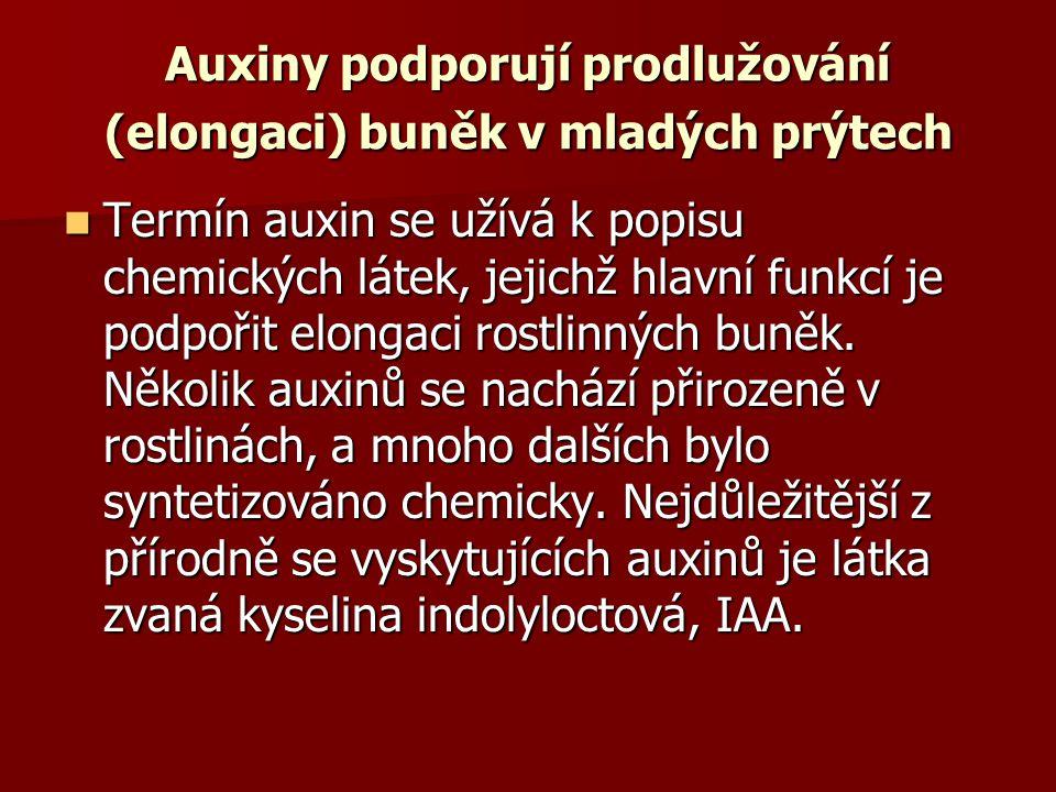 Auxiny podporují prodlužování (elongaci) buněk v mladých prýtech Termín auxin se užívá k popisu chemických látek, jejichž hlavní funkcí je podpořit el