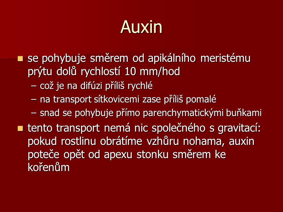 Auxin se pohybuje směrem od apikálního meristému prýtu dolů rychlostí 10 mm/hod se pohybuje směrem od apikálního meristému prýtu dolů rychlostí 10 mm/hod –což je na difúzi příliš rychlé –na transport sítkovicemi zase příliš pomalé –snad se pohybuje přímo parenchymatickými buňkami tento transport nemá nic společného s gravitací: pokud rostlinu obrátíme vzhůru nohama, auxin poteče opět od apexu stonku směrem ke kořenům tento transport nemá nic společného s gravitací: pokud rostlinu obrátíme vzhůru nohama, auxin poteče opět od apexu stonku směrem ke kořenům