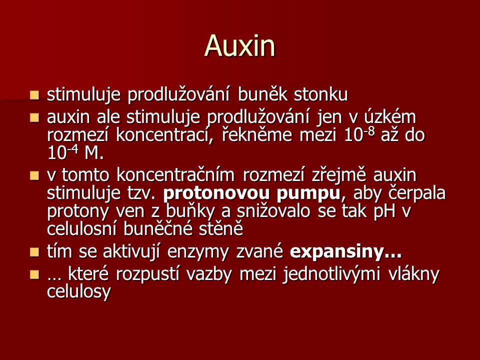 Auxin stimuluje prodlužování buněk stonku stimuluje prodlužování buněk stonku auxin ale stimuluje prodlužování jen v úzkém rozmezí koncentrací, řekněme mezi 10 -8 až do 10 -4 M.