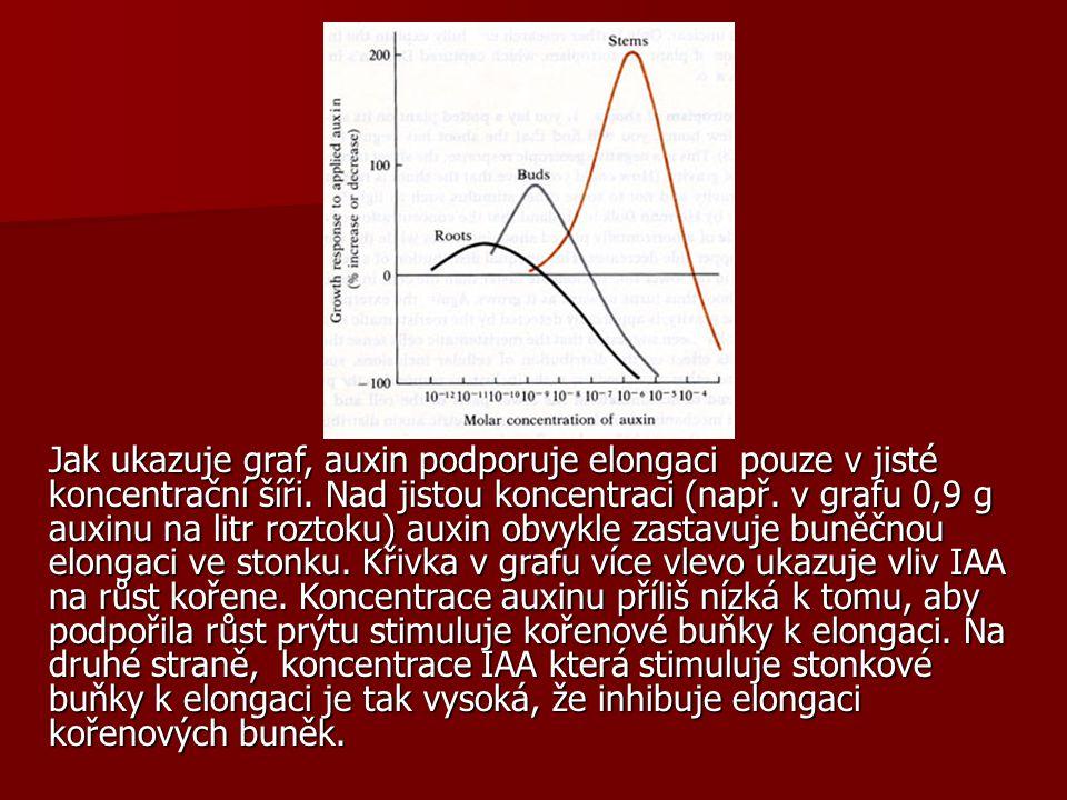 Jak ukazuje graf, auxin podporuje elongaci pouze v jisté koncentrační šíři. Nad jistou koncentraci (např. v grafu 0,9 g auxinu na litr roztoku) auxin