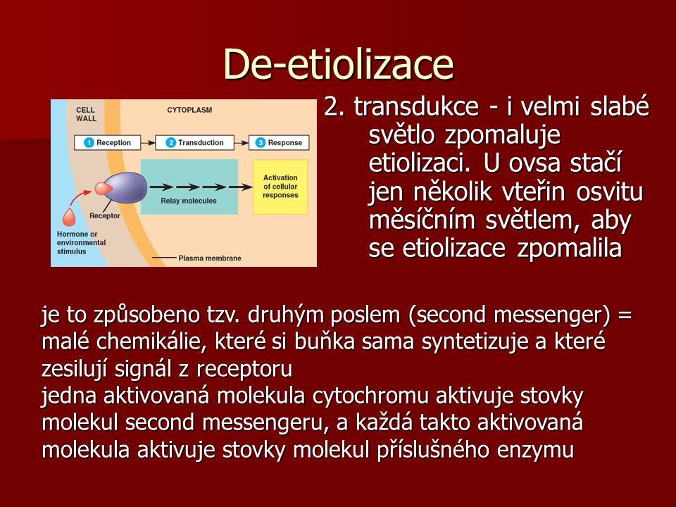 De-etiolizace 2.transdukce - i velmi slabé světlo zpomaluje etiolizaci.