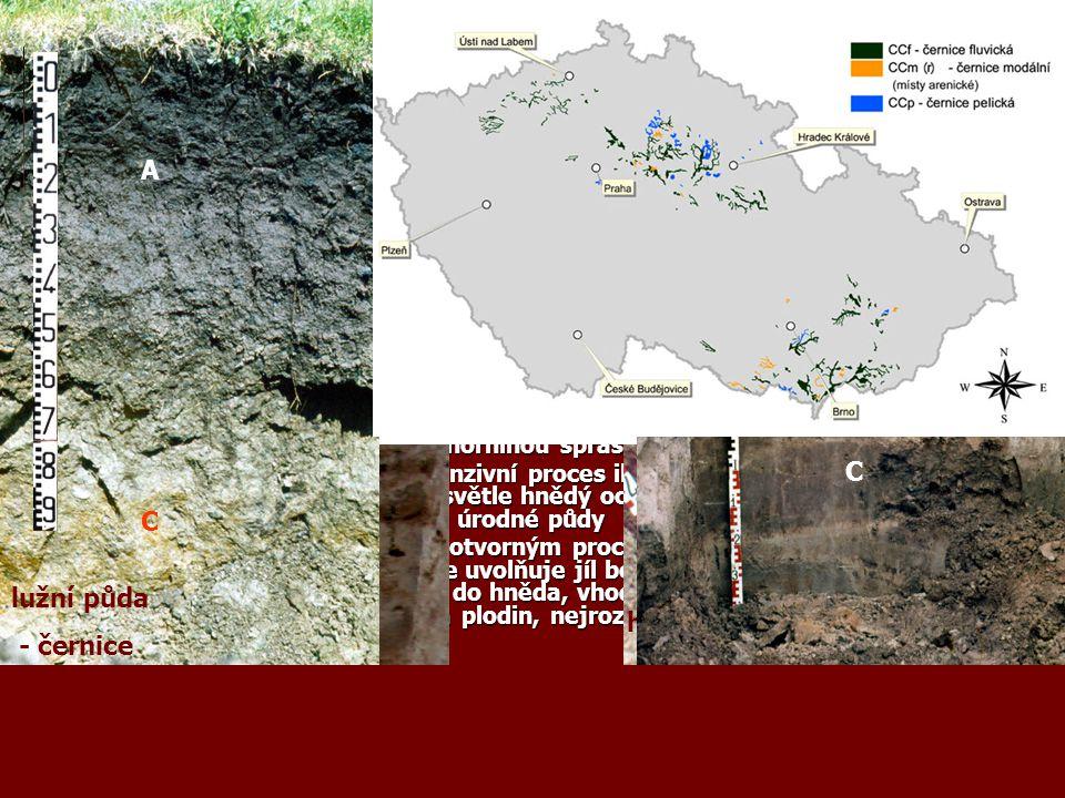 Zonálnost a azonálnost půdního krytu Pedosféra je rozdělena podle typu podnebí a podle georeliéfu. Rozšíření půd se řídí zákonitostmi zeměpisné zonáln