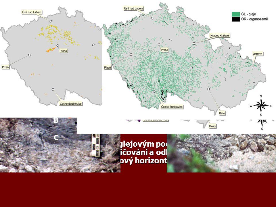 Půdní typy v mírném pásu 1. Nivní půdy – podél řek, dříve každoročně zaplavovány, pastviny, louky, lužní lesy 2. Lužní půdy – vyvinuly se dále od řek,