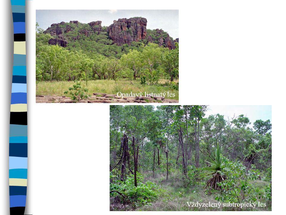 Opadavý listnatý les Vždyzelený subtropický les