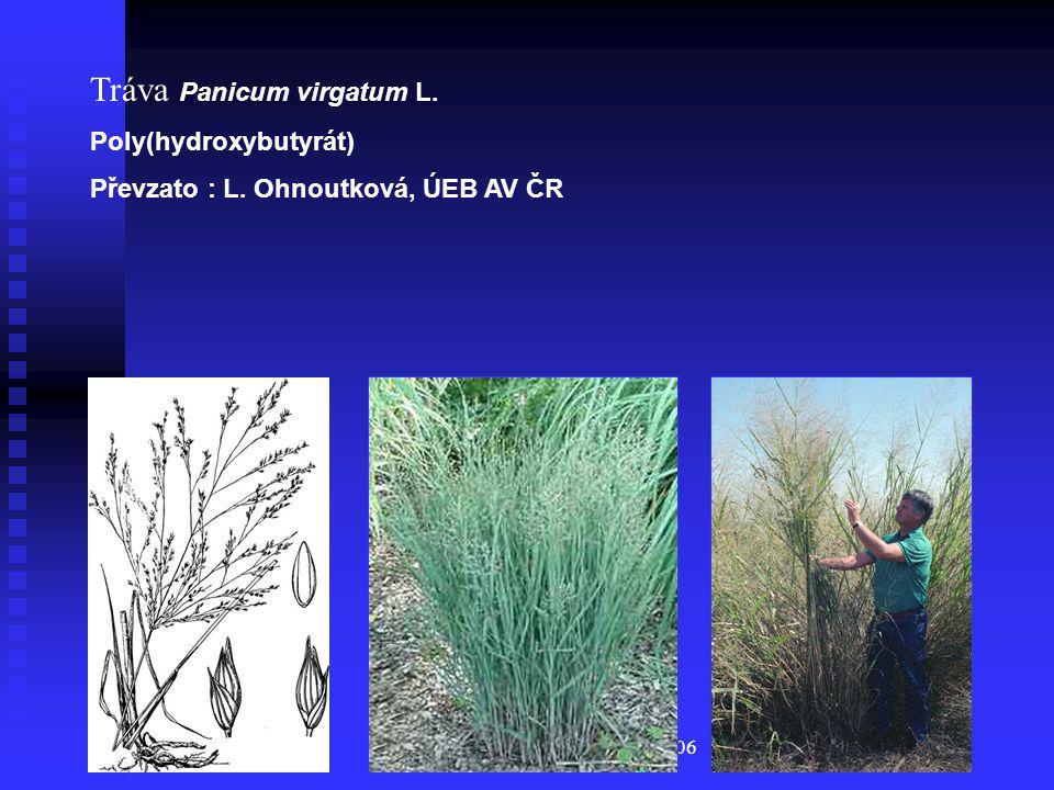 BIOTRIN, Kulatý stůl 2006 Tráva Panicum virgatum L. Poly(hydroxybutyrát) Převzato : L. Ohnoutková, ÚEB AV ČR