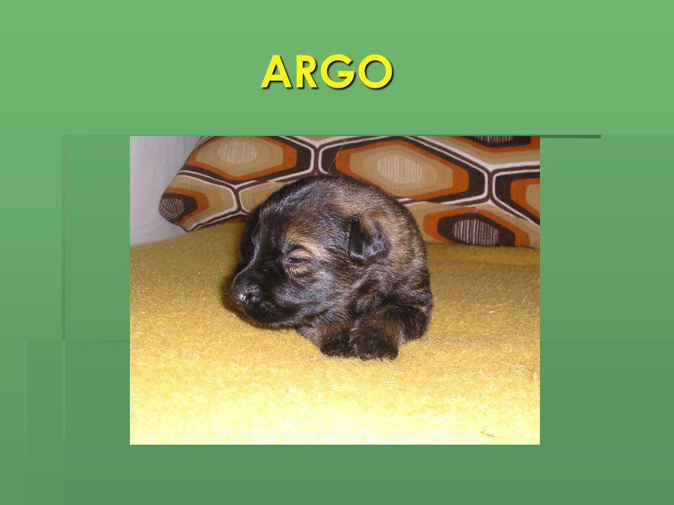 ARGO ARGO