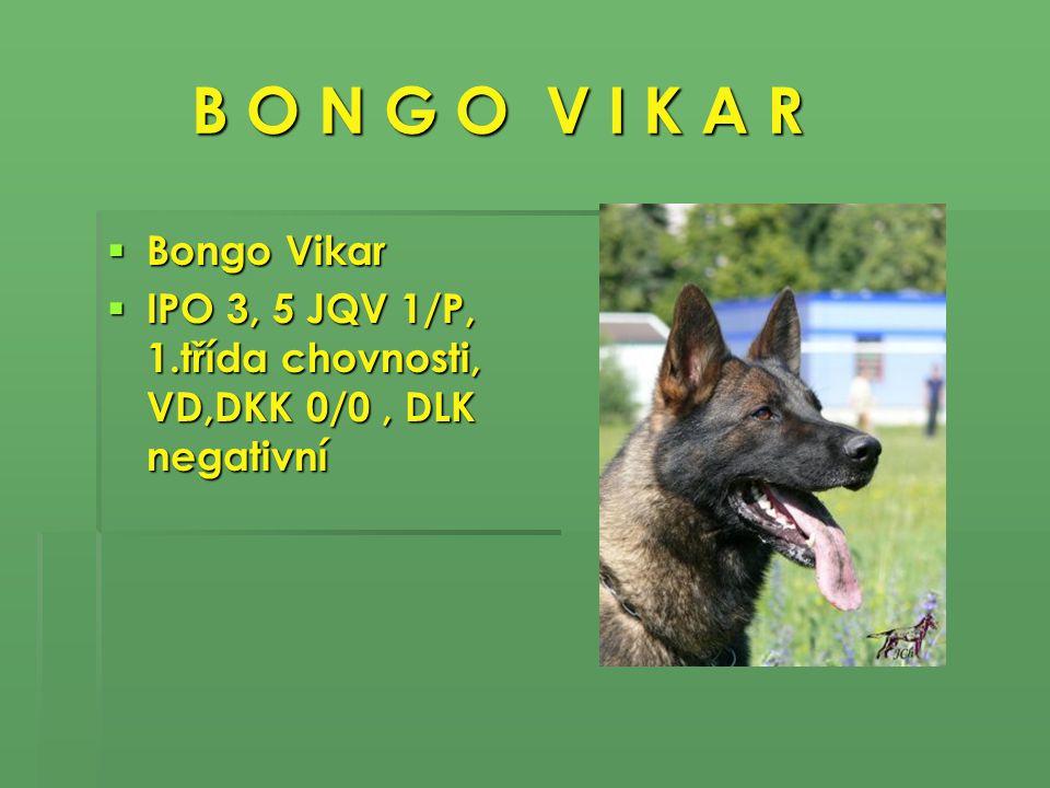 B O N G O V I K A R B O N G O V I K A R  Bongo Vikar  IPO 3, 5 JQV 1/P, 1.třída chovnosti, VD,DKK 0/0, DLK negativní