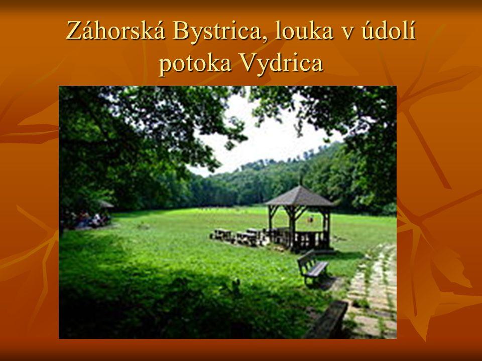 Záhorská Bystrica, louka v údolí potoka Vydrica