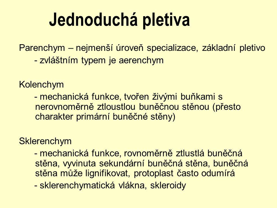 Jednoduchá pletiva Parenchym – nejmenší úroveň specializace, základní pletivo - zvláštním typem je aerenchym Kolenchym - mechanická funkce, tvořen živ