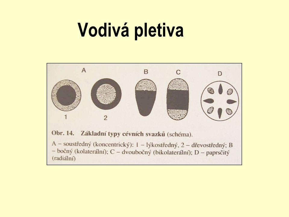 Krycí pletiva - tvoří povrch těla, ohraničují jej vůči vnějšímu prostředí - primárním krycím pletivem rostliny je pokožka (epidermis – kutin, vosky, ztlustlé buňky; rhizodermis) - nad epidermis ještě kutikula (vosky, kutin) - chlupy čili trichomy (vznikají z pokožkových buněk, pokud se na jejich vzniku podílí i podpokožkové buňky = emergence)
