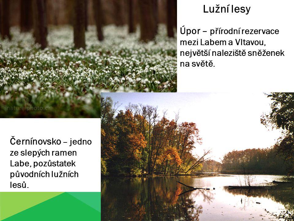 Lužní lesy Úpor – přírodní rezervace mezi Labem a Vltavou, největší naleziště sněženek na světě. Černínovsko – jedno ze slepých ramen Labe, pozůstatek