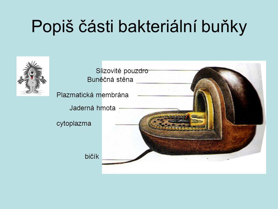 Popiš části bakteriální buňky Slizovité pouzdro Buněčná stěna Plazmatická membrána Jaderná hmota cytoplazma bičík